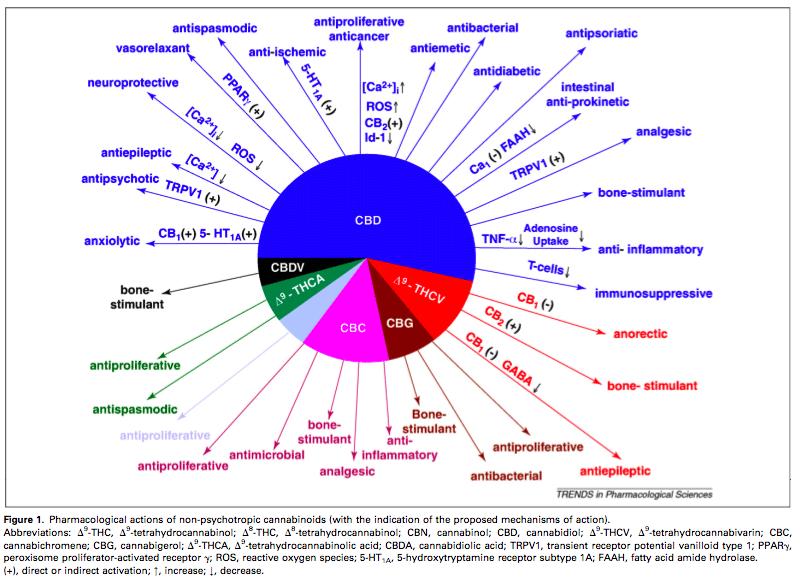 cannabinoids-pie-chart.png