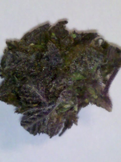 Highest thc level most potent medical marijuana strains tested by