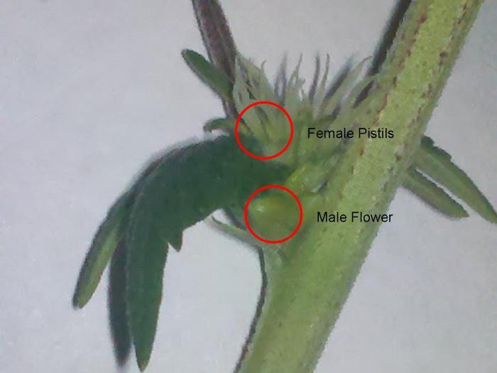sex determination in plants In the wild, lizard sex determination is climate-sensitive  plants and animals  the iflscience newsletter.